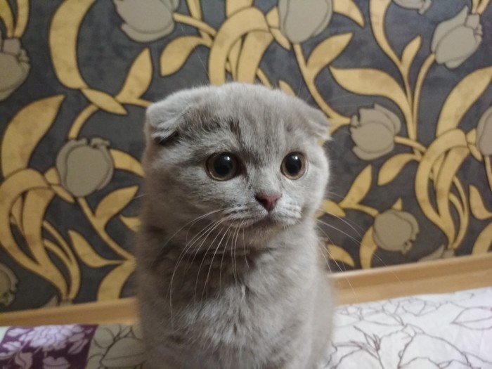 Пост любителей котеек, или мутация моей кошки в кота Кот, Животные, Фотография, Длиннопост