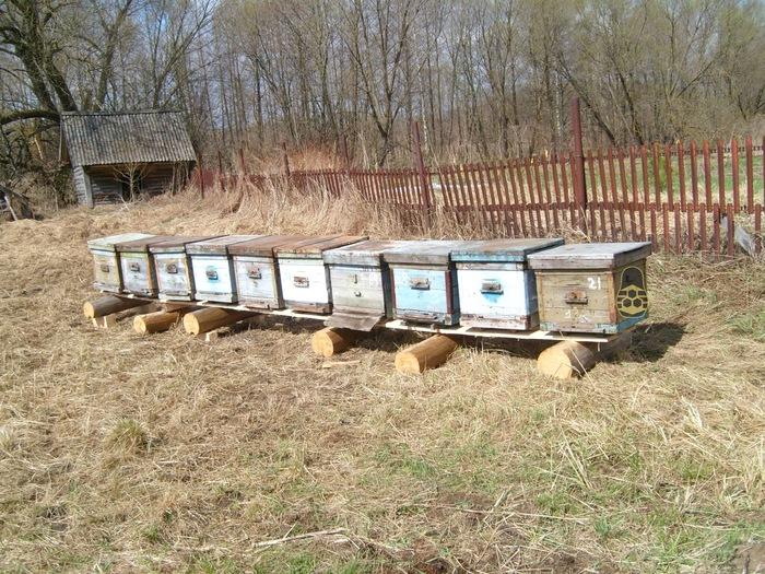 Воспоминания о том, как я открывал пасеку (24 фото) (часть 1) Пасека, Хорошие пчёлы, Пчеловодство, Пасечник, История, Биография, Как мы начинали свой бизнес, Длиннопост