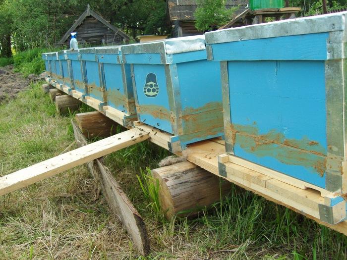 Воспоминания о том, как я открывал пасеку (14 фото) (часть 2) Пасека, Хорошие пчёлы, Пчеловод, Пчеловодство, Пасечник, История, Биография, Как мы начинали свой бизнес, Длиннопост