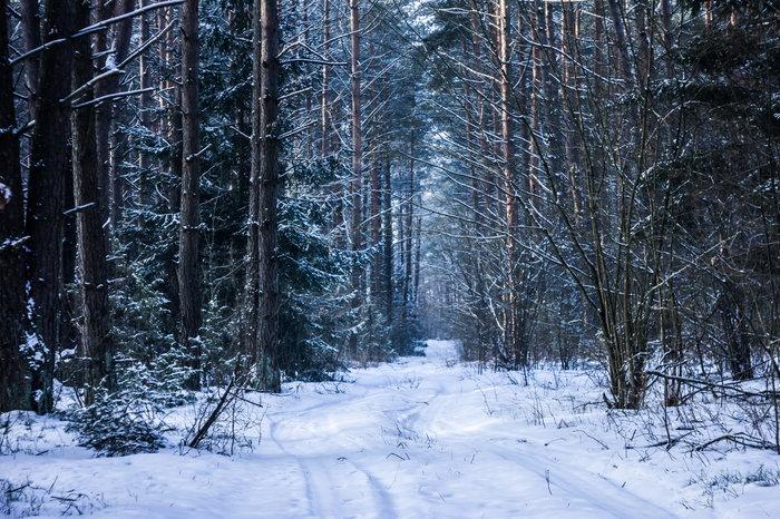 Лесной тропы фото Зима, Лес, Природа, Пейзаж, Снег, Холод