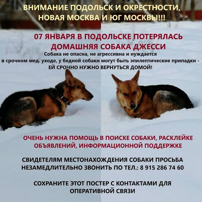 Пропала собака Потеряшка, Пропала собака, Подольск, Собака, Помогите найти, Без рейтинга