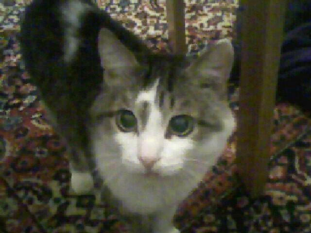 Кошачьи истории. Трехцветная кошка, Прайд, Длиннопост, Кот, Жизнь