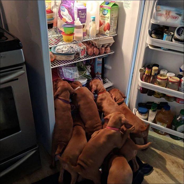 О,нет! Закройте холодильник!