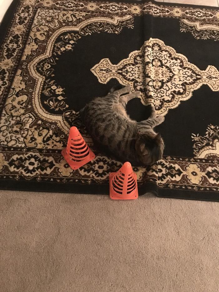"""""""Мама волновалась, что кто-нибудь наступит на кота, поэтому пометила его конусами"""""""