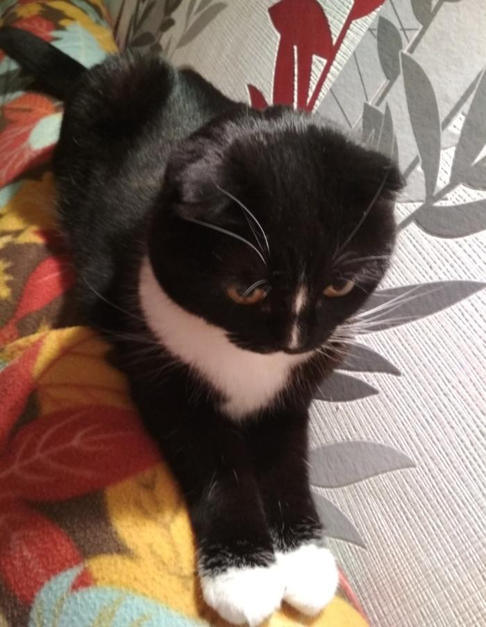 Кошка вылиняла котенка) Кот, Линька, Длиннопост