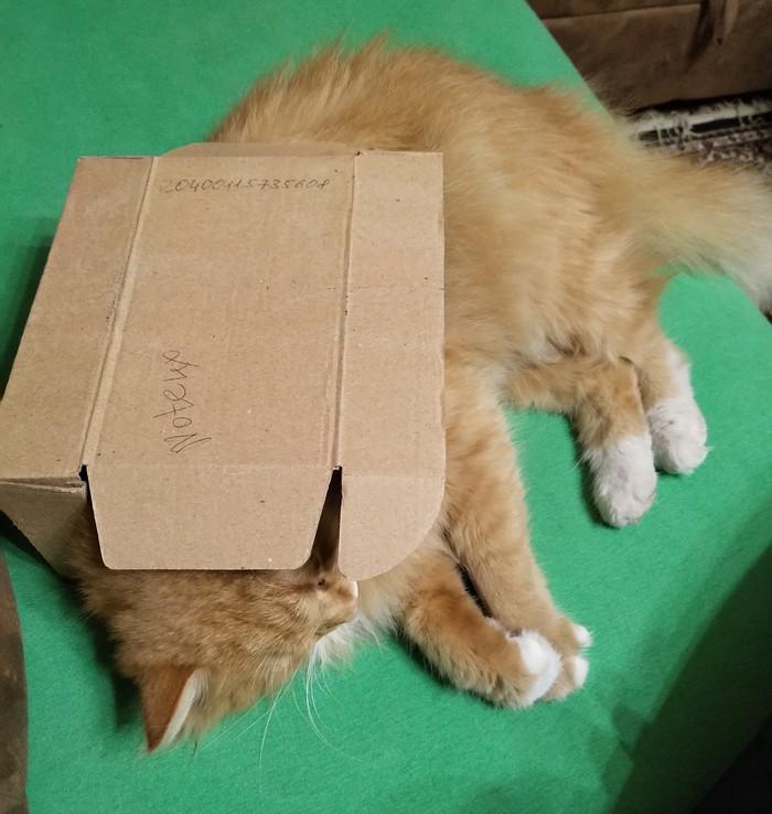 В домике Котомафия, А мне норм, Кот, Коробка и кот