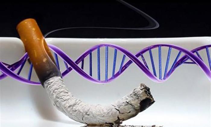 УЧЁНЫЕ ВЫЯСНИЛИ КАК ВРЕДНЫЕ ПРИВЫЧКИ РОДИТЕЛЕЙ ВЛИЯЮТ НА ДНК ДЕТЕЙ Эволюция, Наука, Биология, Человек, ДНК, Медицина, Генетика, Теория