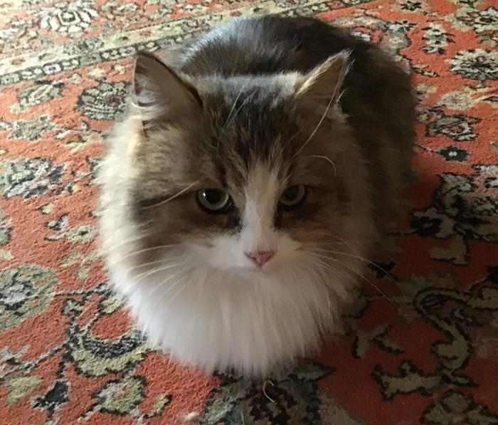 Люблю котов . Котомафия, Кошкин дом, Длиннопост, Кот