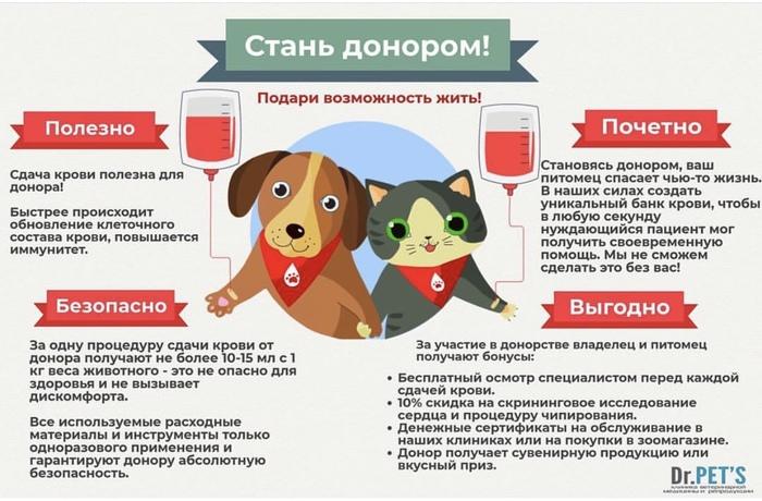 Донорство животных или как спасти жизнь Донор, Донорство, Доноры крови, Ветеринария, Благотворительность, Домашние животные, Собака, Кот, Длиннопост