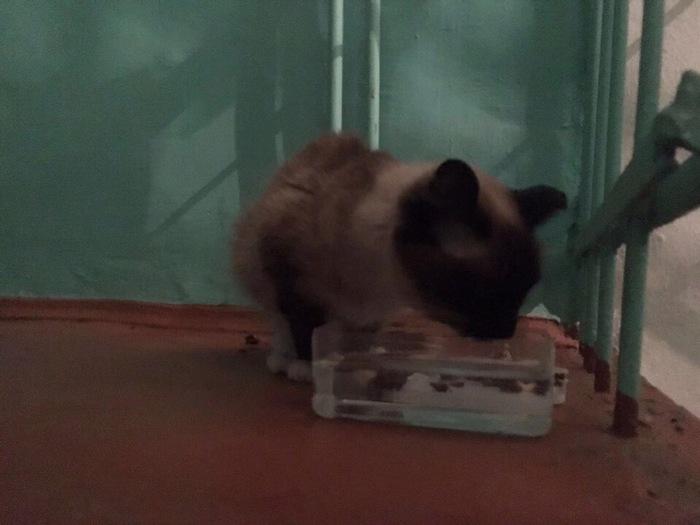 Найдена кошка Иркутск Иркутск, Потеряшка, Найден кот, Ищу хозяина, Длиннопост, Без рейтинга, Кот
