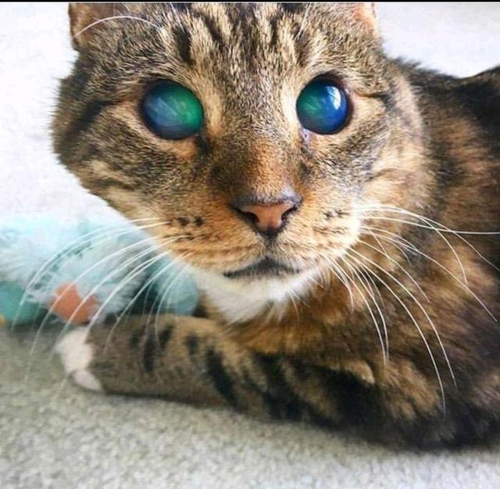 Этот взгляд - просто космос Кот, Картинки, Слепой