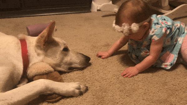 """""""Последние несколько месяцев я объяснял псу, что ему НЕЛЬЗЯ облизывать лицо ребенка. Но оказалось, дочке для счастья нужно было именно это"""""""
