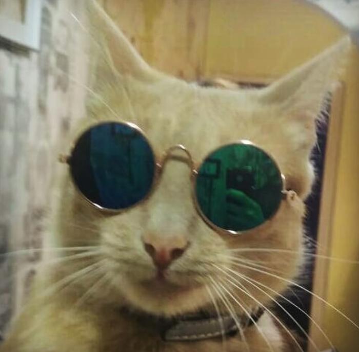 Быстрый способ добавить крутоты своему котейке Кот, Очки, Находки на али, Товары для животных, Отзывы на Алиэкспресс, Aliexpress, Длиннопост, Котомафия