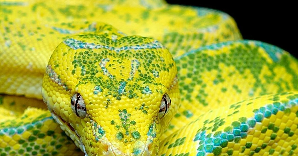Картинки змей питонов