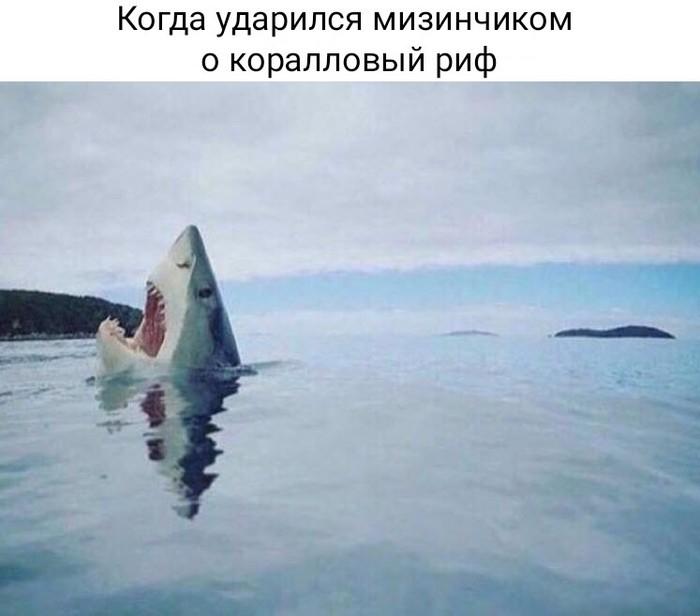 Акулья боль