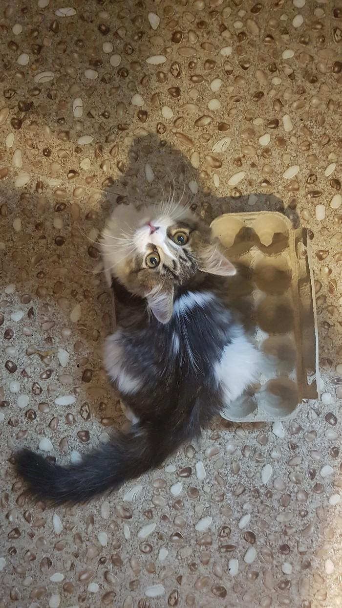 Кошка. Десяток.