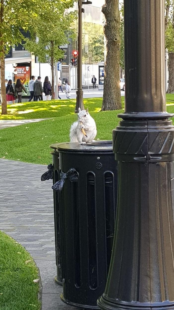 Белая белка Животные, Природа, Парк, Альбиносы