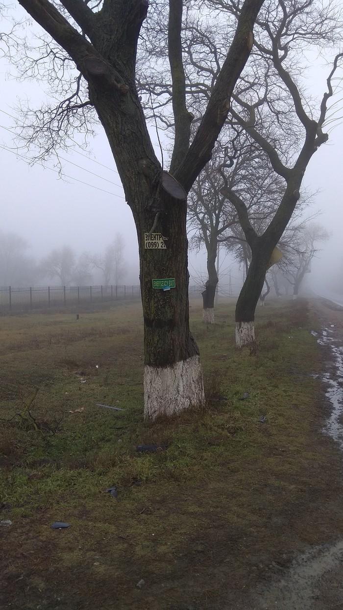 Аварийный выход... Дерево, Туман, Безысходность, Длиннопост