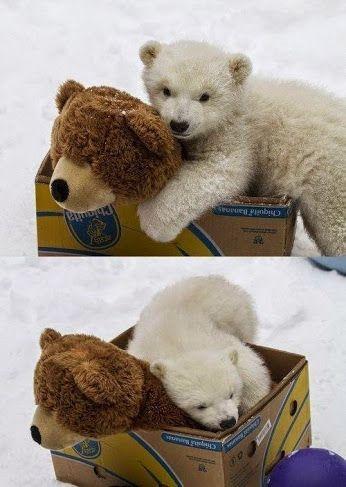 Медведик который немного котик