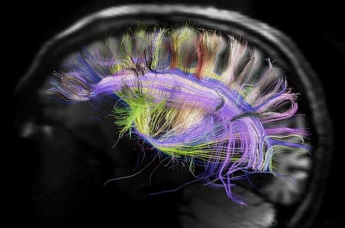 10 фактов о памяти, которые вы не знали Познавательно, Факты, Память, Интересное, Наука, Исследование, Длиннопост