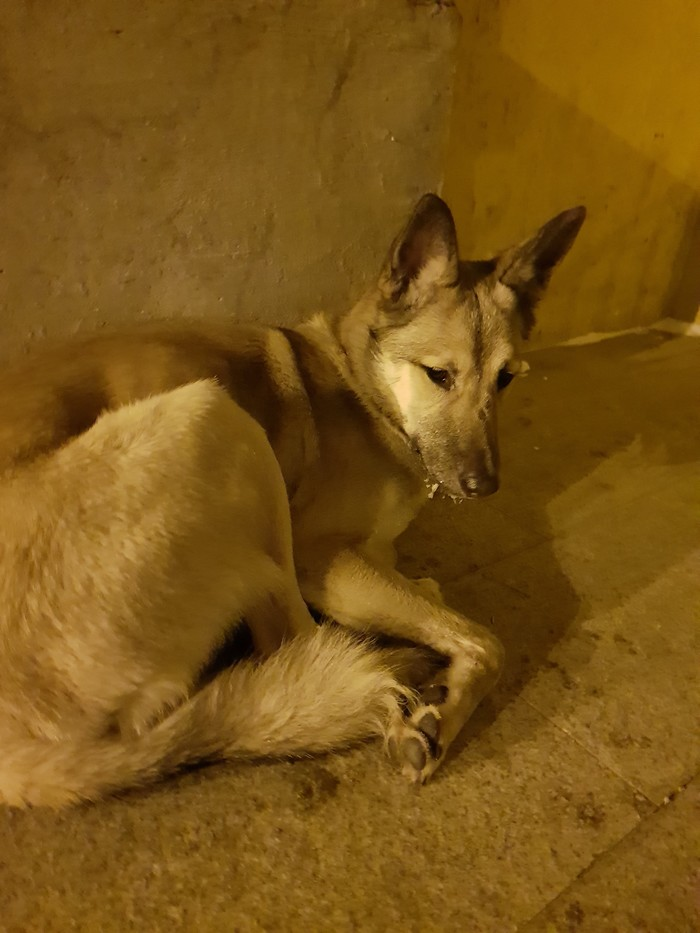 Собака ищет дом Уфа Помощь животным, Уфа, Собака, Без рейтинга, В добрые руки