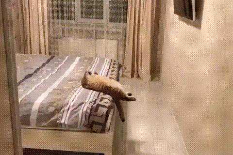 Кот, тебе нормально? Кот, Гифка, Видео, Поза, Кровать