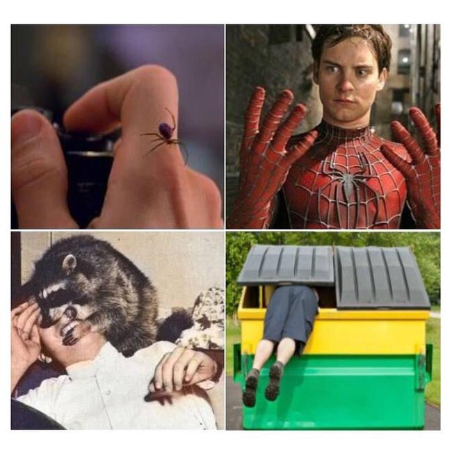 Человек-енот Супергерои, Мутация, Енот, Паук, Человек-Паук