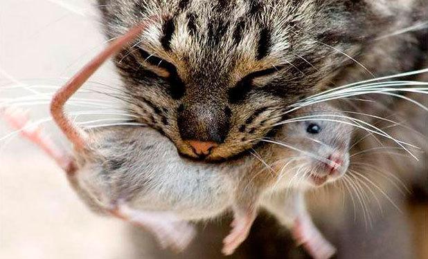 Разговор о кошках... История, Реальная история из жизни, Кот, Мышь, Женщина