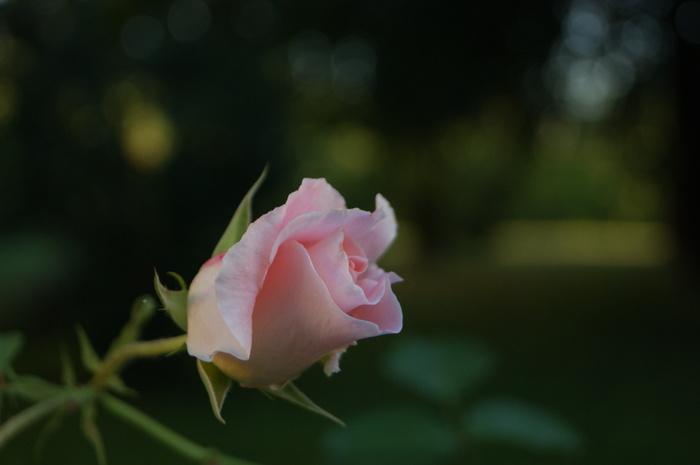 Цветы Цветы, Фотография, Начинающий фотограф, Длиннопост