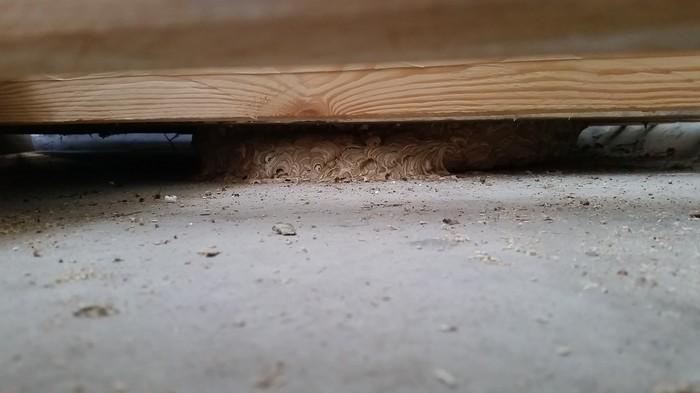 Это какие-то неправильные пчёлы! Балкон, Длиннопост, Оса, Осиное гнездо