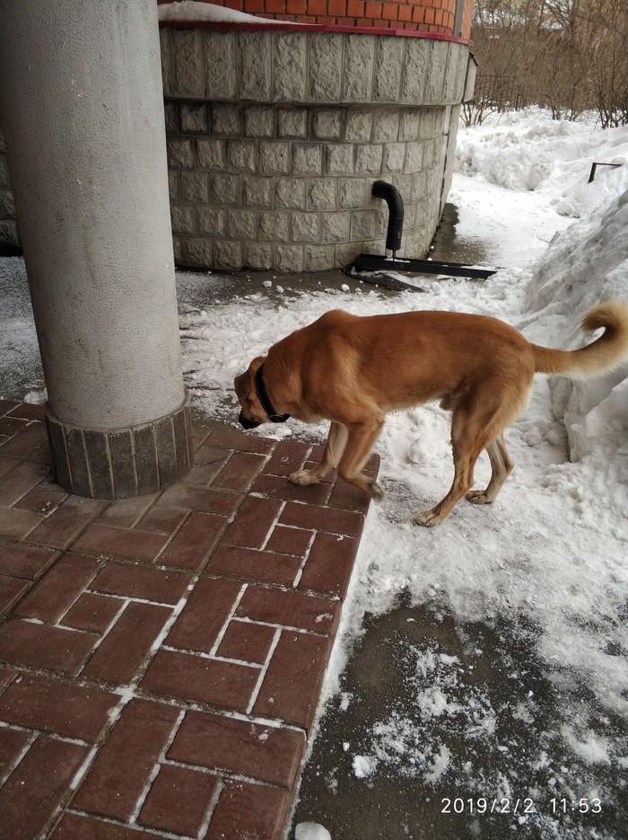 Потерялся пёс? Мытищи Потерялся, Собака, Мытищи, Длиннопост, Без рейтинга
