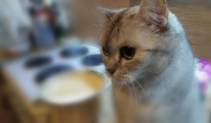 Просто красивая фотка киски получилась Кися на столе, Красота, Кот