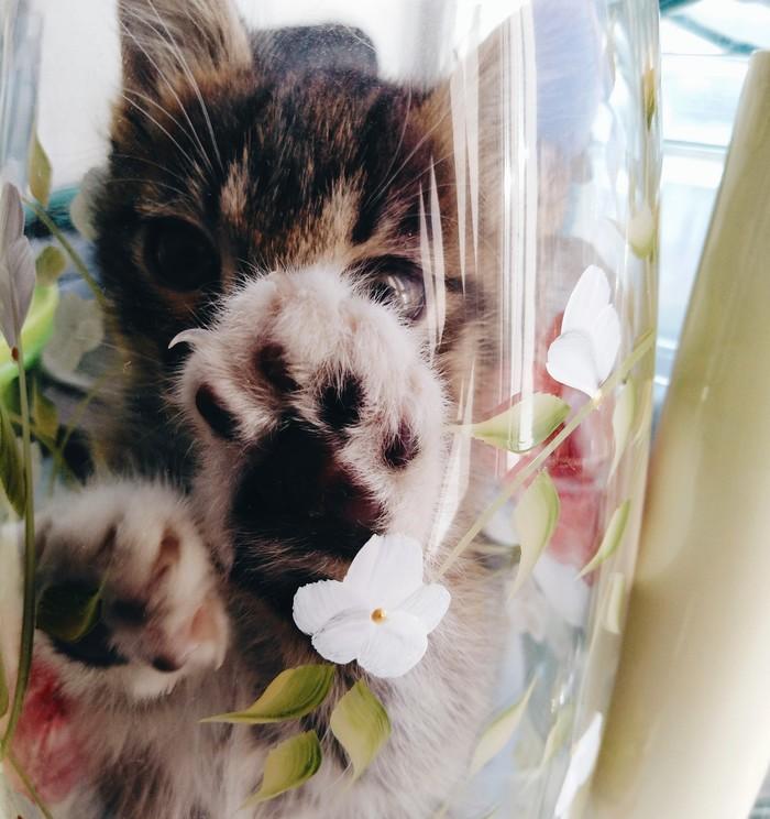 Милый котик в вазе