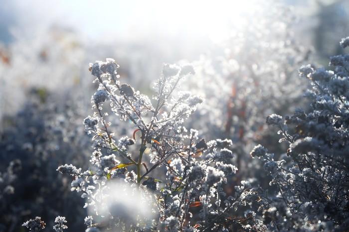 Зимнее утро Длиннопост, Fujifilm, Фотография, Зимнее время