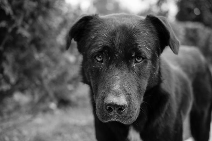 Уличный пёс Ryazanman, Собака, Nikon d3100, Nikkor 40mm