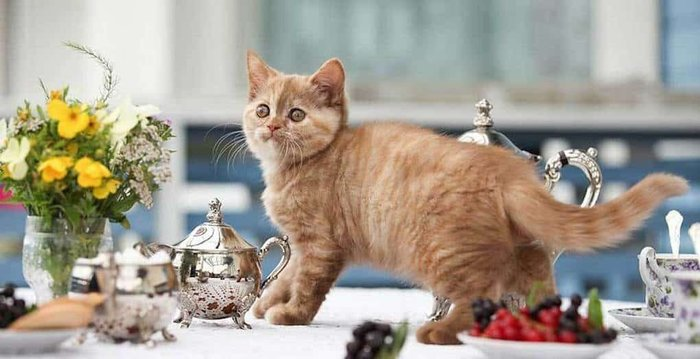 Вредные привычки кошек, которые мы воспитываем сами... Из сети, Кот, Привычка, Поведение, Воспитание, Характер, Инстинкт, Длиннопост