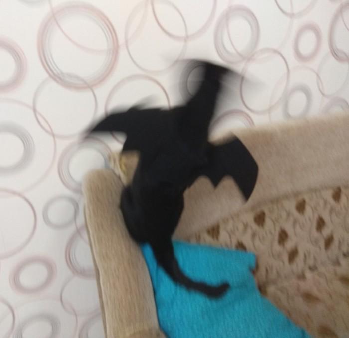 Беззубик) Кот, Как приручить дракона, Животные, Ночная фурия, Крылья