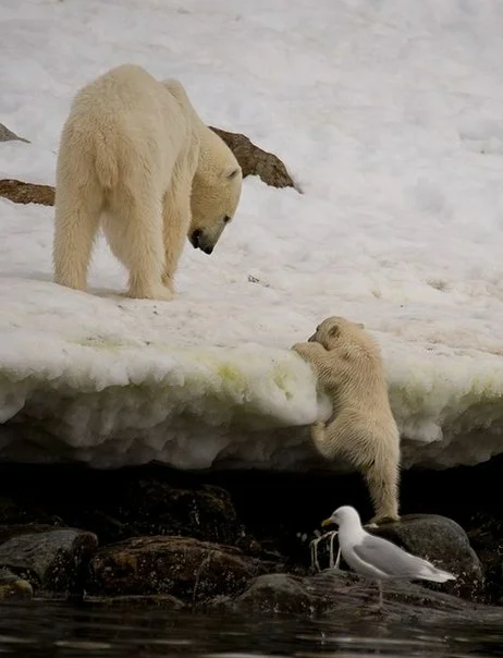 Мама, помоги!