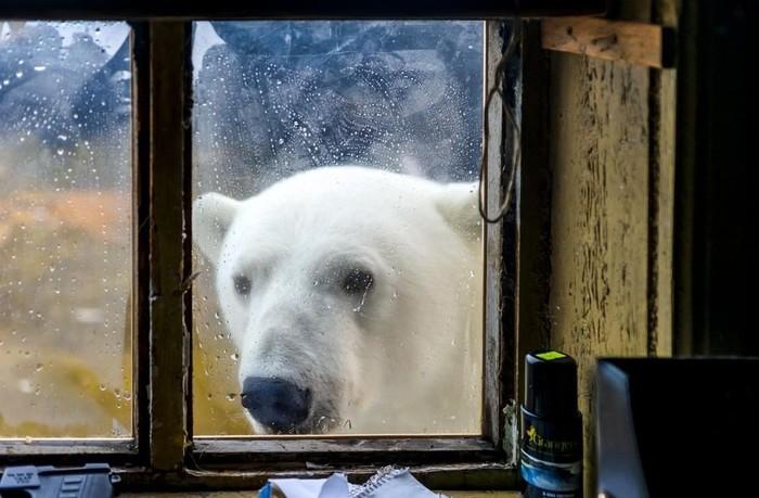 Здрасте, есть кто дома!?