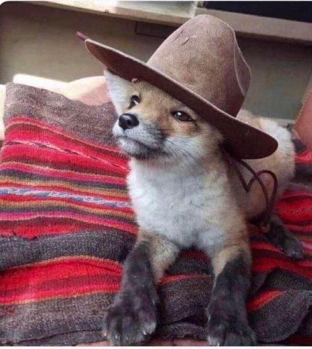Милая лисичка