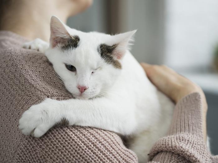 Когда два глаза на двоих Кот, Котомафия, Котята, Приют для животных, Приют Три Товарища, Особенные животные, Челябинск