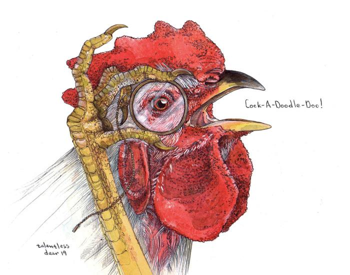 Cock-A-Doodle-Doo! Рисунок, Акварель, Графика, Петух, Арт, Иллюстрации, Птицы, Скетч