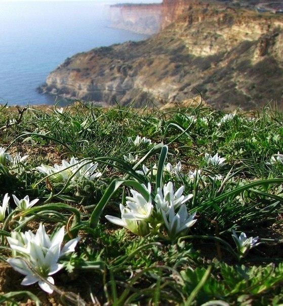 В Крыму уже почти весна Крым, Весна, Природа, Фотография