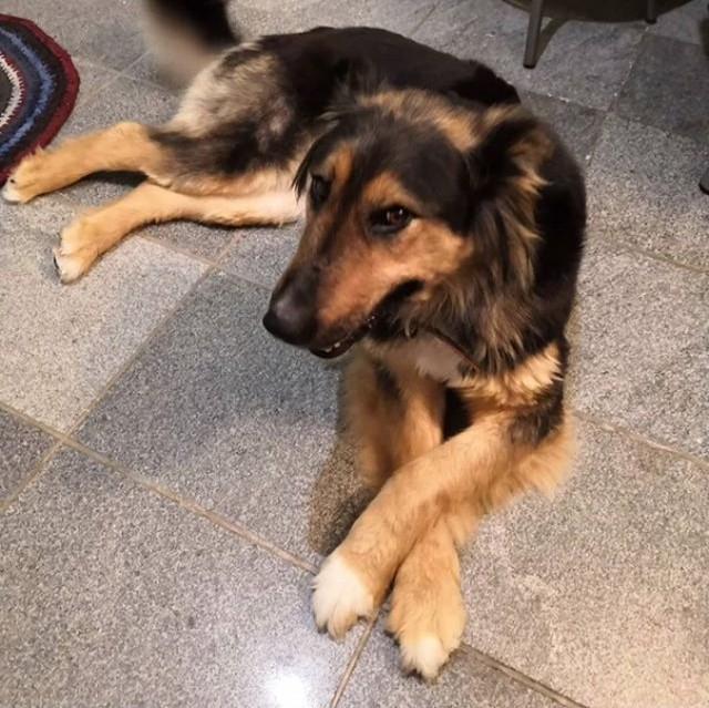 Найдена собака г. Тюмень Тюмень, Собака, В добрые руки, Длиннопост, Найдена собака, Без рейтинга