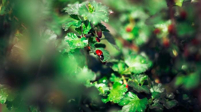 Летнее настроение Лето, Фотография, Canon 600D, Гелиос