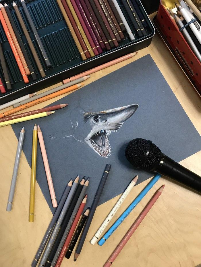 Акула Акула, Рисунок, Творчество, Анималистика, Подводный мир, Длиннопост, Морские обитатели, Рыба, Цветные карандаши