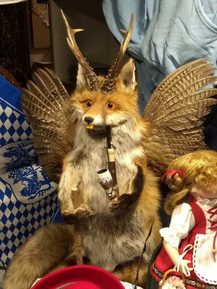 Не все лисы одинаково упороты Таксидермия, Упоротый лис, Мое тотемное животное, Лиса, Рога, Чучело, Трубка