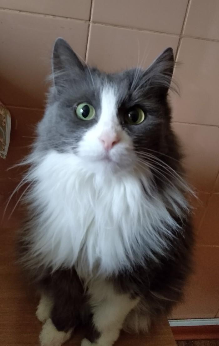 Кошка ищет дом! Город Волгоград! Кот, Длиннопост, Помощь животным, В добрые руки, Волгоград, Без рейтинга