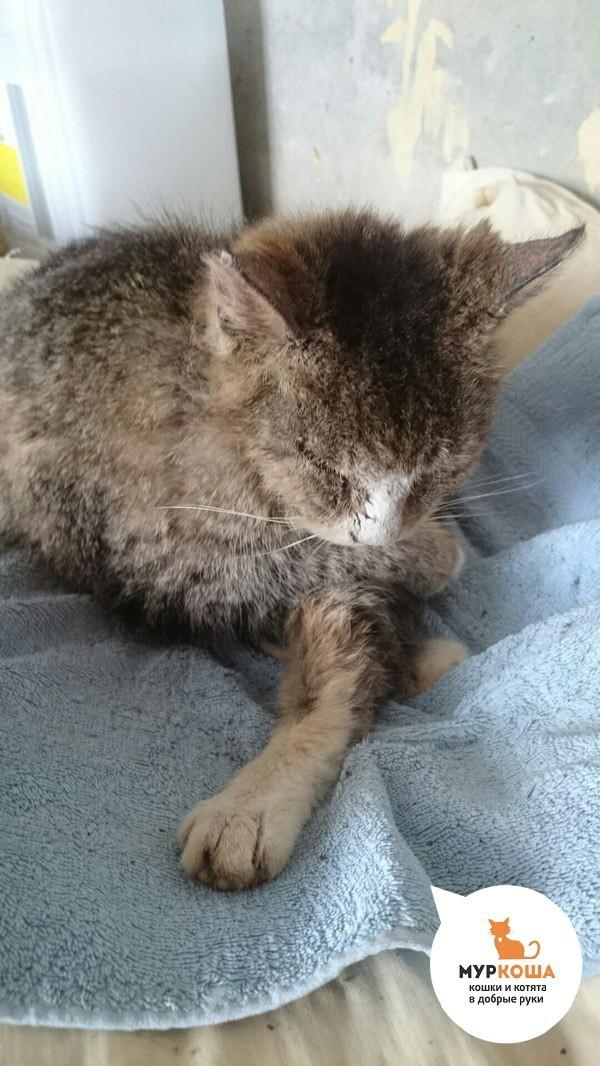 Чудесная история бездомной кошки Марьяны, которую спасли от гибели. Длиннопост, Приют для животных, Реальная история из жизни, Кот