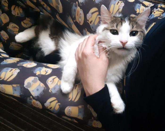 Новый член семьи Кот, Член семьи